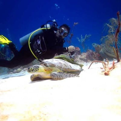 Diver and Turtle in Akumal, Riviera Maya