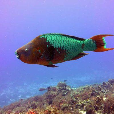 Colorful fish - Cozumel Top Diving Destination Tour