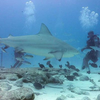 Bull Shark and diver - Diving Tour - Playa del Carmen, Mexico