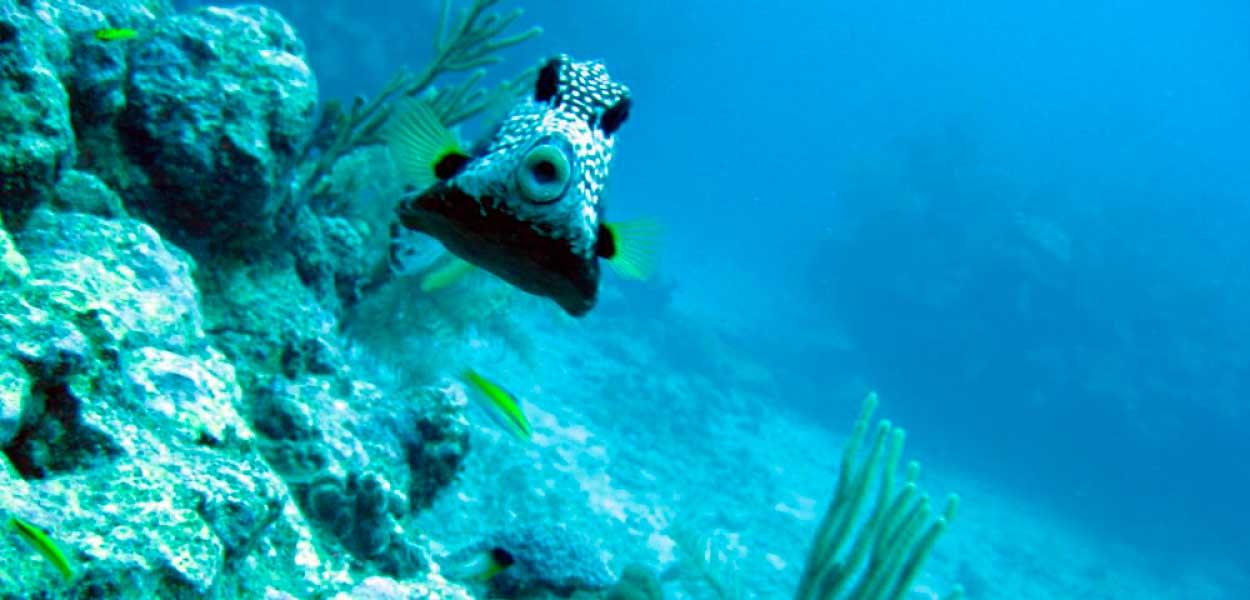 09-reef.jpg