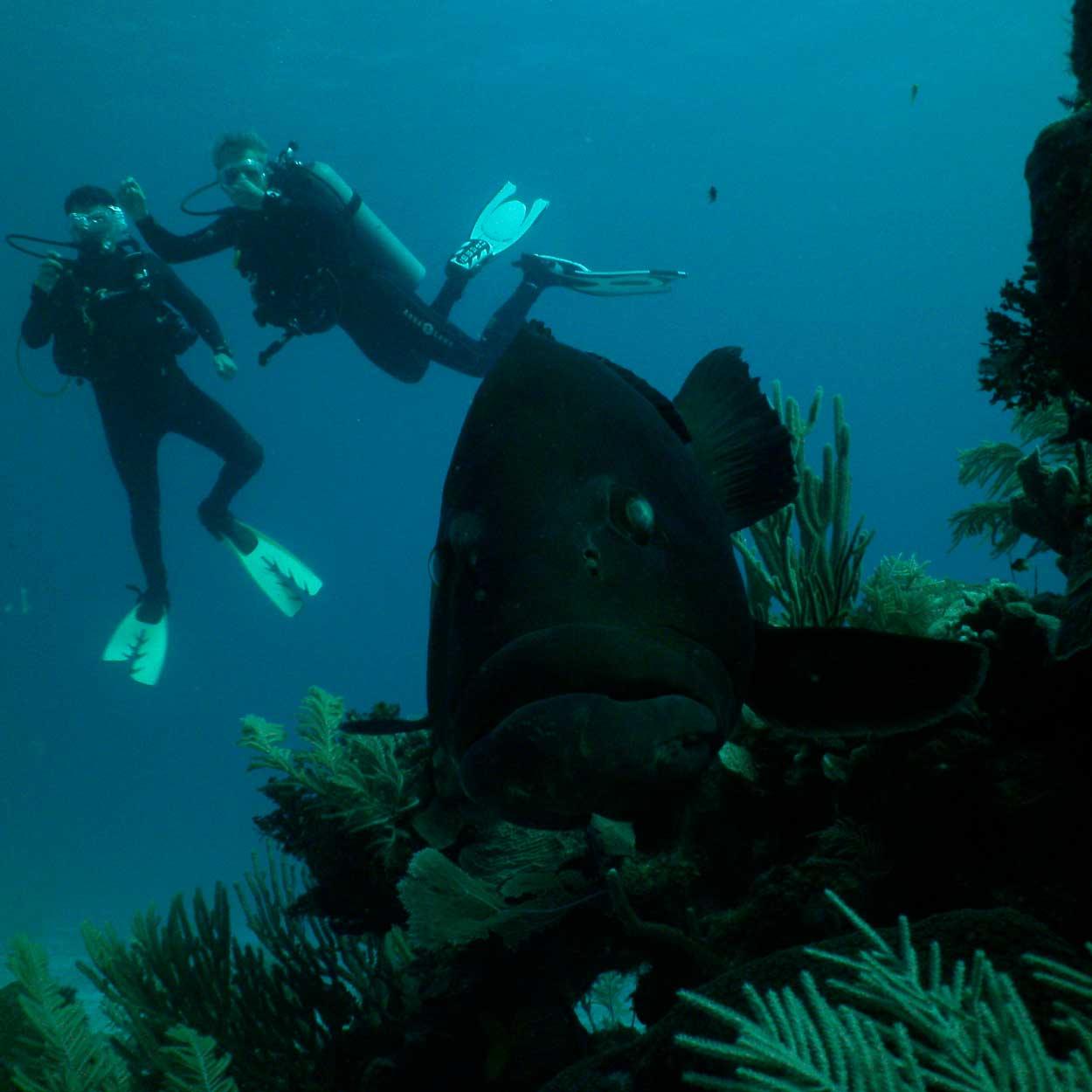 17-deep-diving.jpg