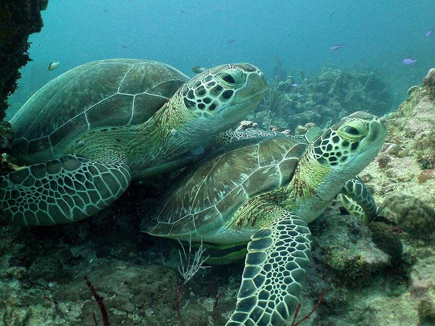 ocean-diving-84.jpg