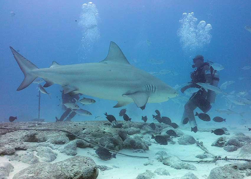 bull-shark-tour-004.jpg