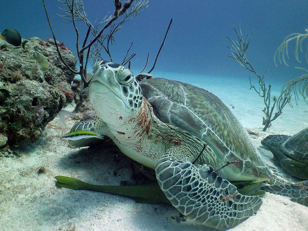 turtle-akumal.jpg