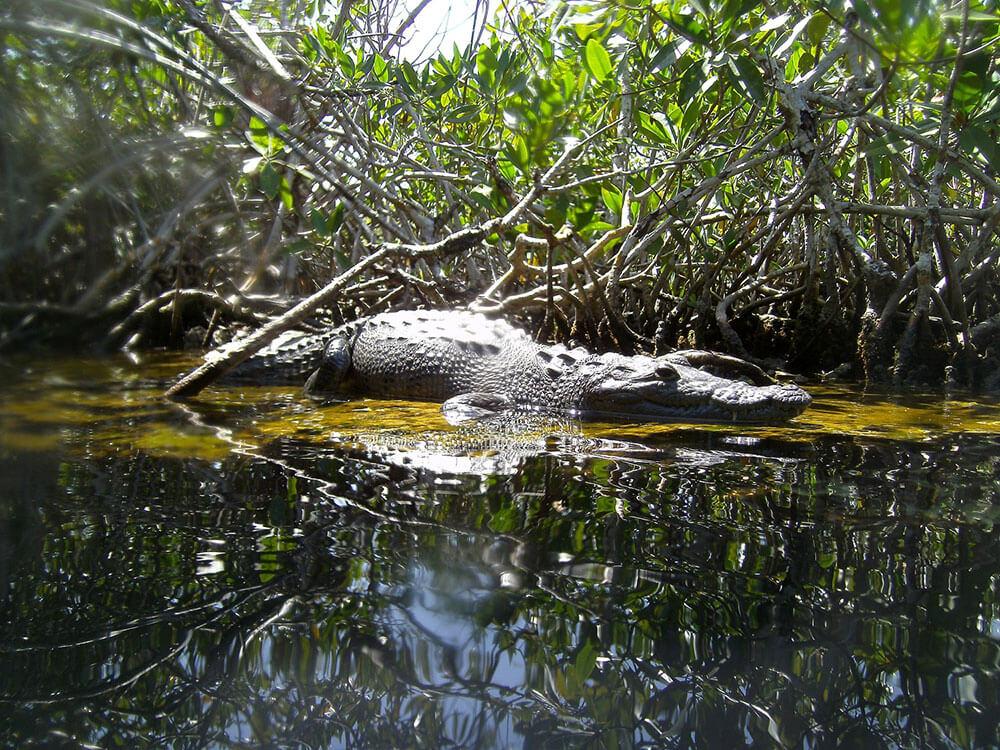 pancho-casa-cenote-crocodile.jpg