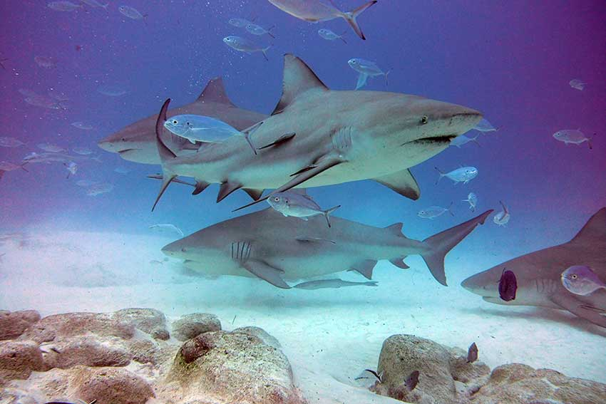 bull-shark-tour-001.jpg