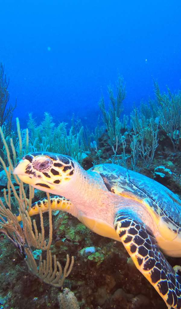 The best hidden diving secret in Mexico with turtles