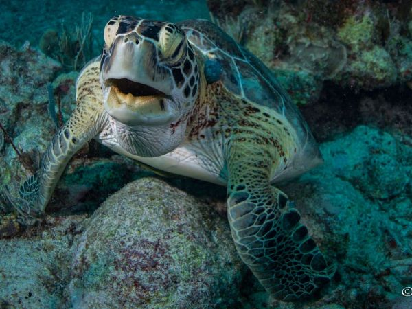10 Reasons why the Riviera Maya is one of the best Scuba Diving Destinations